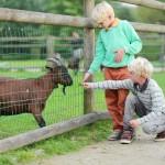 Kindergeburtstag im Zoo Hannover