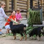 Kindergeburtstag im Zoo Duisburg