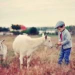 Kindergeburtstag auf dem Bauernhof in Hannover