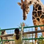 Kindergeburtstag im Tierpark Hagenbeck